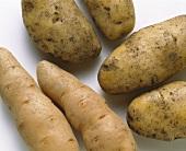 Assorted Kinds of Potatoes