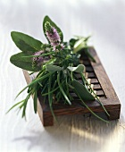 Still life with mixed herbs on a wooden bench