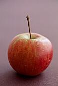 Elstar apple on dark background