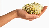 Alfalfa sprouts in a woman's hand