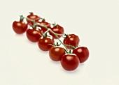 Ten tomatoes on a truss