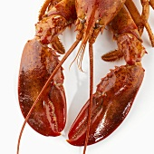 Detail of a cooked lobster