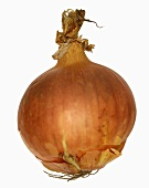 Eine Zwiebel