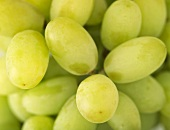 Seedless table grapes (filling the picture)