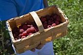 Woodchip basket of fresh raspberries