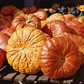 Pumpkin still life (variety: Roter Zentner)
