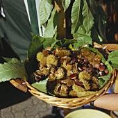 Basket of freshly gathered sweet chestnuts
