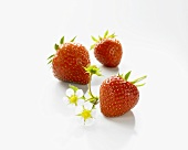 Three strawberries with strawberry flowers