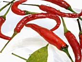 Chillies, variety Thai Red, in water (close-up)