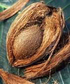 A coconut in its shell