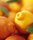Several mandarin oranges with leaves (full-frame)