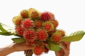 Freshly-picked rambutans