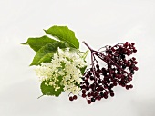 Elderflowers and elderberries