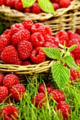 Fresh raspberries in two baskets (close-up)