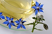A cup of borage tea and borage flowers
