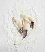 Three squid on crushed ice