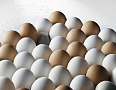 White and brown eggs in an egg tray