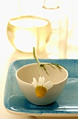 Bowl with chamomile flower