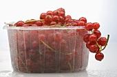 Redcurrants in plastic punnet