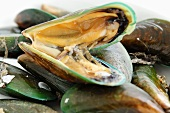 Green mussels (Thailand)