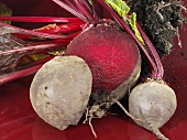 Beetroots with soil