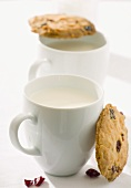Cranberry cookies and two cups of milk