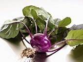 A purple kohlrabi with leaves and roots