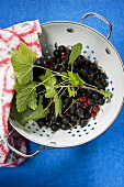Redcurrants and jostaberries in a colander, seen from above