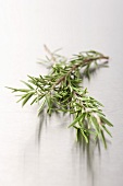 Rosemary on a metal surface