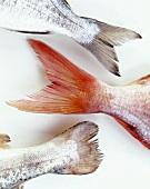 Three fish tails