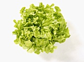 A green oak leaf lettuce