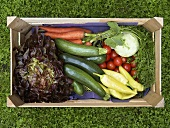 Crate of fresh vegetables and salad