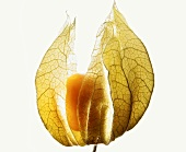 Physalis in its husk