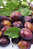 Several Purple Plums with Leaf