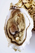 Opened oyster with oyster meat and a pearl