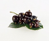 Blackcurrants on white background