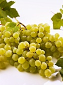 Green grapes with leaves on white background