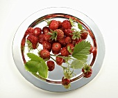 Wild strawberries on a silver plate