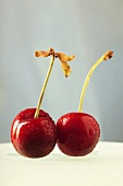 Two cherries with stalks