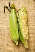 Two corn cobs with husks