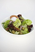 Mixed salad leaves with cucumber, olives and onions