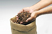 Two hands full of coffee beans
