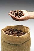 Coffee beans in someone's hand and in a jute sack