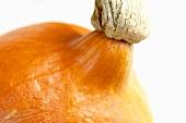 An orange squash
