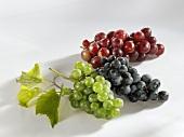 Muskateller grapes, Müller Thurgau & Muskat Trollinger