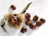 Sweet chestnuts, with shell and leaf
