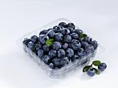 Fresh blueberries in a plastic punnet