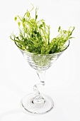Pea shoots in a glass