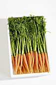 Young carrots with tops in a box