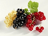 White, black and redcurrants